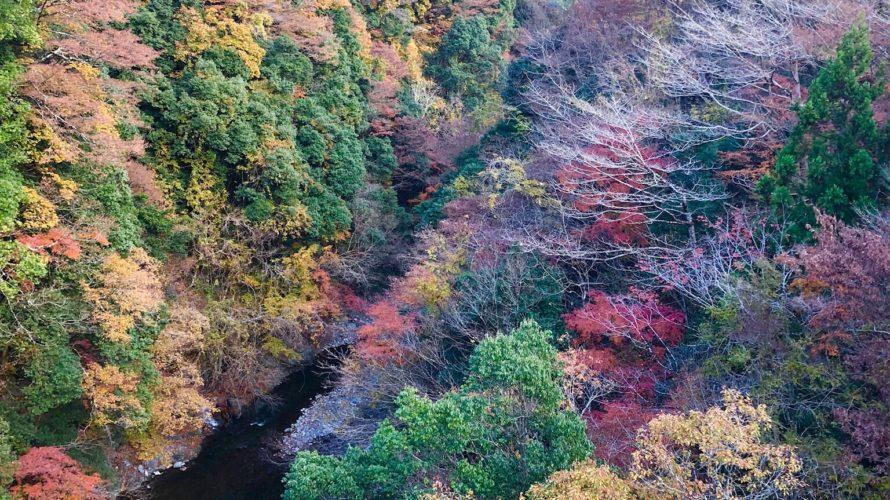 紅葉の大室山ハイキングに行ってきました